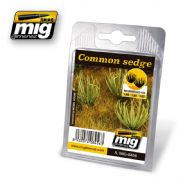 COMMON SEDGE<br>A.MIG-8456